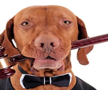 Dog Bites Law